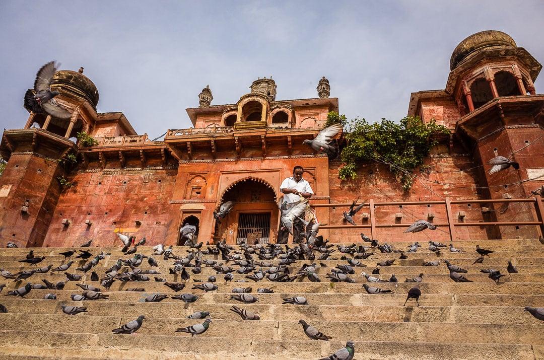 A man feeds pigeons in front of Chet Singh Ghat in Varanasi