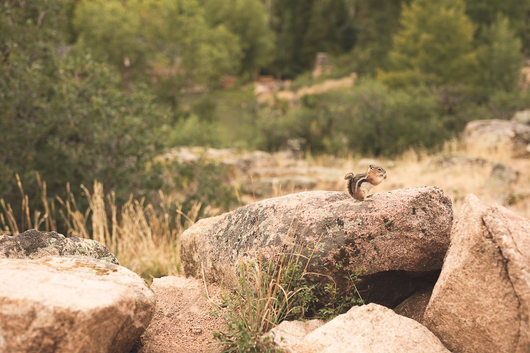 A chipmunk eats near the picnic tables in Steamboat Springs