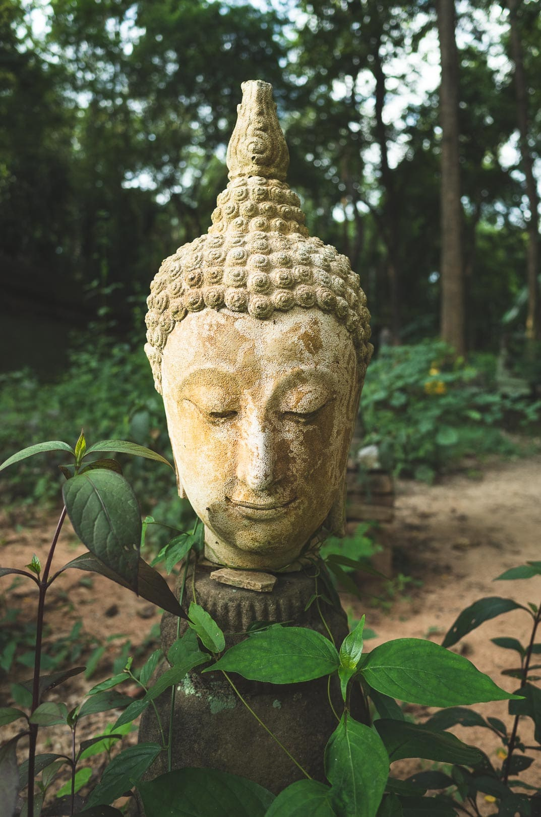 A white Buddha head sits in a garden at Wat Umong temple in Chiang Mai, Thailand