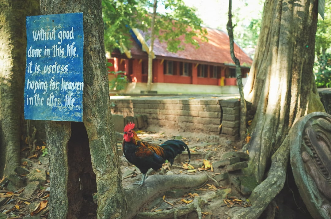 A proverb is written on a sign that hangs from a tree next to a rooster at Wat Umong temple in Chiang Mai, Thailand
