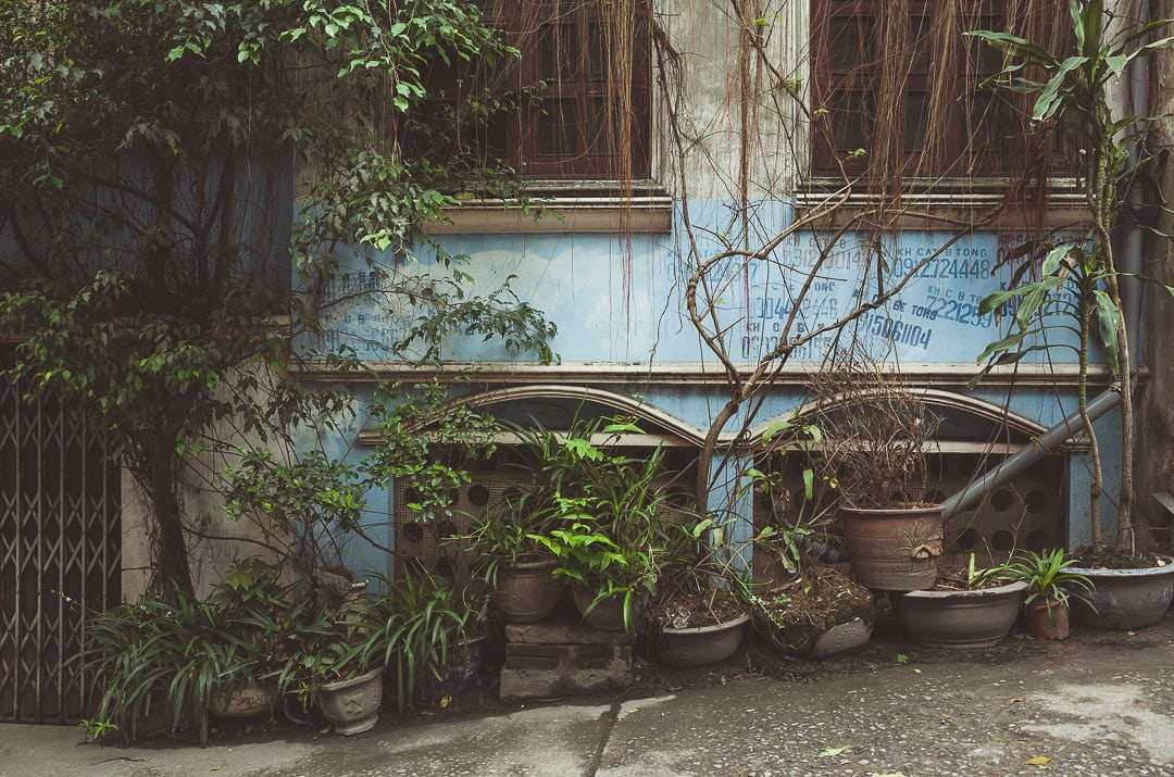 Plants and vines grow near a blue home in Hanoi, Vietnam