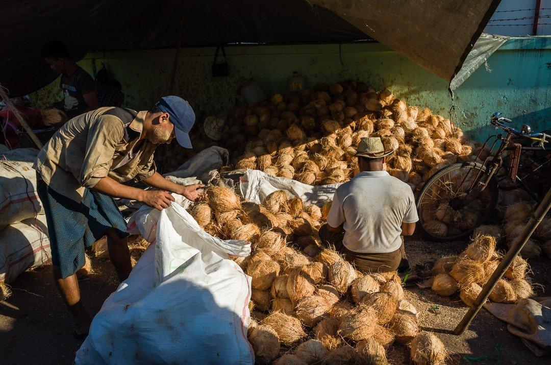 Two men sift through coconuts in Yangon, Myanmar