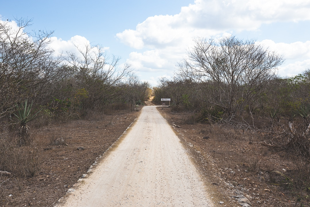 A white limestone dirt road in Homun, Mexico leading to cenotes