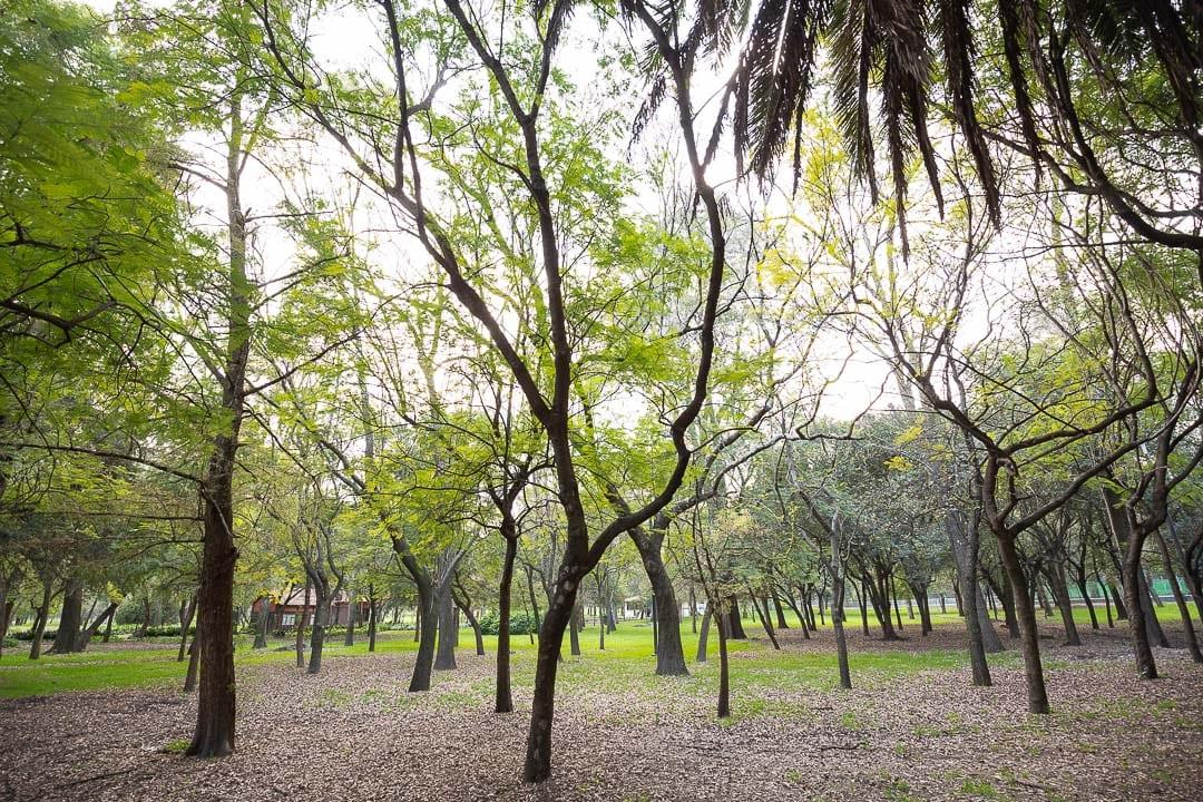 Viveros de Coyoacan Park