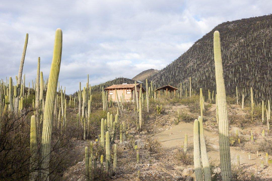 Cabaña for staying the night at Helia Bravo Hollis garden