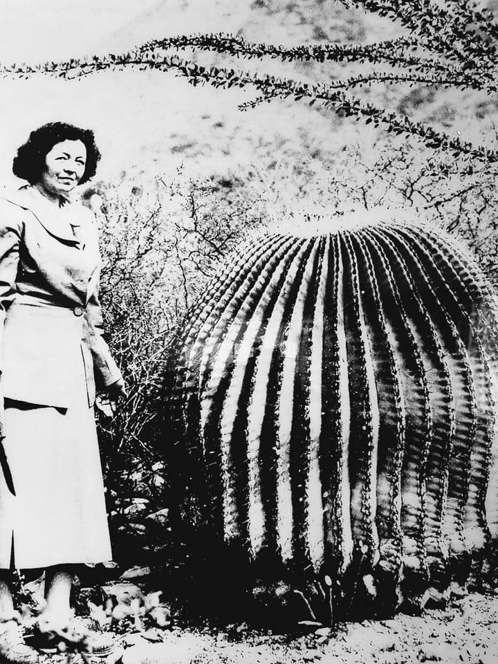 Helia Bravo Hollis cactus expert