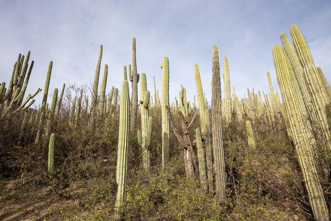 Cactus at Helia Bravo Hollis Garden in Mexico